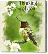 Thinking Of You Hummingbird Flora Fauna Greeting Card Canvas Print