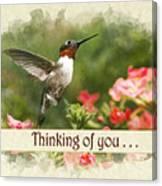 Thinking Of You Hummingbird Garden Jewel Greeting Card Canvas Print