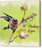 Thinking Of You Hummingbird Wing And A Prayer Greeting Card Canvas Print