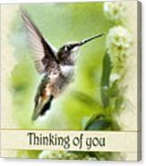 Thinking Of You Peaceful Love Hummingbird Greeting Card Canvas Print