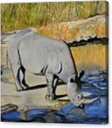 Thirsty Rhino Canvas Print