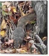 Thirsty Squirrel Canvas Print