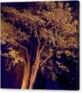 This Difficult Tree Canvas Print