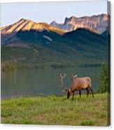 This Is Alberta 10 - Bucks Sunset Snack Canvas Print