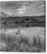 This Is Alberta 9b - Bucks Having A Swim Canvas Print