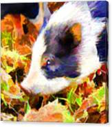 This Little Piggy Canvas Print