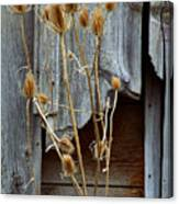 Thistle And Wood Canvas Print