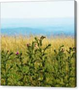 Thistle On The Blue Ridge Canvas Print