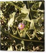 Thorn Love Canvas Print