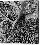 Thorn Tree Black And White Canvas Print