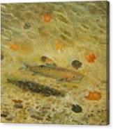 Thorndike Pond Trout Canvas Print