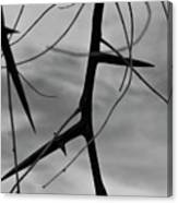 Thorns In Silouette Canvas Print