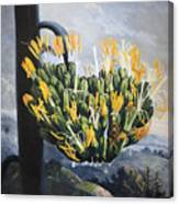 Thornton: Aloe Canvas Print