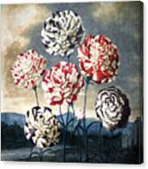Thornton: Carnations Canvas Print