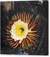 Thornton: Cereus Canvas Print