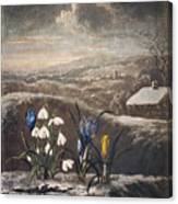 Thornton: Crocusi Canvas Print