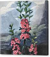 Thornton: Kalmia Canvas Print