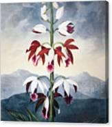 Thornton: Limodoron Canvas Print