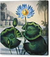 Thornton: Water Lily Canvas Print