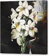 Thornton: White Lily Canvas Print