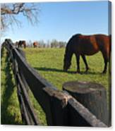 Thoroughbred Horses In Kentucky Pasture Canvas Print