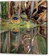 Those Eyes Frog Eyes Canvas Print