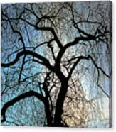 Those Gnarled Branches Canvas Print