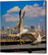 Those Jersey Gulls  Canvas Print