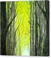 Though The Forest To The Light  Canvas Print