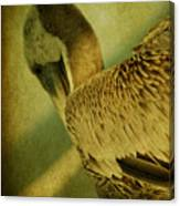 Thoughtful Pelican Canvas Print