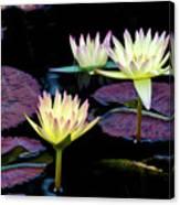 Three A-glow  Canvas Print