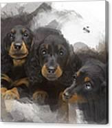 Three Adorable Black And Tan Dachshund Puppies Canvas Print