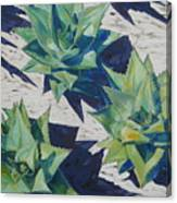 Three Aloe Canvas Print