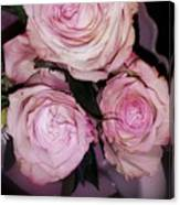 Three Beautiful Roses Canvas Print