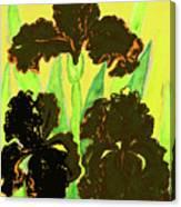 Three Black Irises, Painting Canvas Print