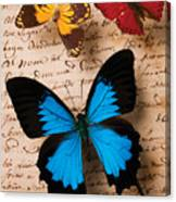 Three Butterflies Canvas Print