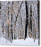 Three Creeks Conservation Area - Winter Canvas Print