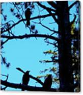 Three Crows In A Tree Canvas Print