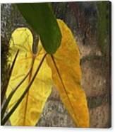 Three Exotic Leaves Canvas Print