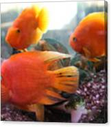 Three Fish Canvas Print