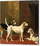 Three Fox Hounds In A Paved Kennel Yard Canvas Print