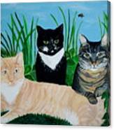 Three Furry Friends Canvas Print