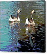 Three Geese Swimming Canvas Print