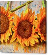 Three Graphic Sunflowers Canvas Print