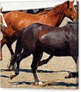 Three Horses Galloping Canvas Print