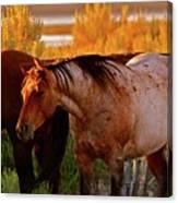 Three Horses Of A Suspicious Corral Canvas Print