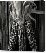 Three Indian Corn In Black And White Canvas Print