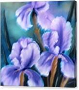 Three Iris Canvas Print