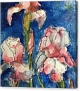 Three  Iris' Canvas Print