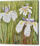Three Irises In The Rain Canvas Print